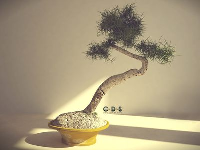 Bonsai - made with C4D.