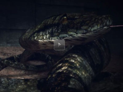 The Big Snake Animaion